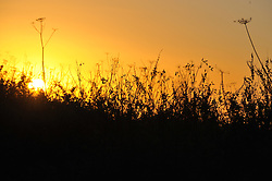 © under license to London News Pictures.  25-20-2010 The morning sun rises through a hedgerow in northern Leicestershire this Monday morning, forecasters predict the cold spell to last until midweek..