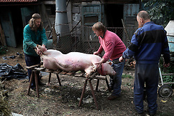 CZECH REPUBLIC VYSOCINA NEDVEZI 25SEP15 - Pig slaughter and portioning at a farmstead in Nedvezi, Vysocina, Czech Republic.<br /> <br /> Pig slaughter is a tradition known in numerous European countries.<br /> <br /> <br /> <br /> jre/Photo by Jiri Rezac<br /> <br /> <br /> <br /> &copy; Jiri Rezac 2015