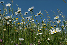 Flowering meadows, just a bunch of flowers