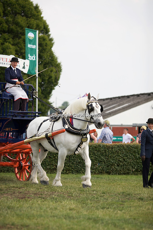 Emma Scotney driving Dick and Sylvia Fuller's grey gelding Percheron<br /> <br /> 4th  Single Trade Turnout