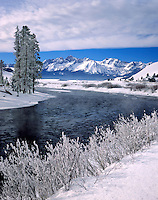 Frosted trees along the Salmon River in the Sawtooth Mountains Idaho USA