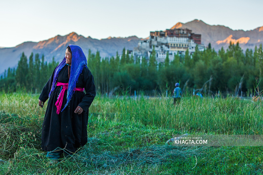 Ladakhi lady looks at her right while working in her field at Thiksey, Ladakh.