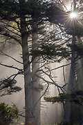 WA14559-00...WASHINGTON - Sun light streaking through the trees along Rialito Beach in Olympic National Park.