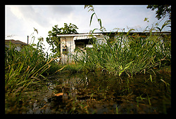 30 May, 2006. Lakeview, New Orleans, Louisiana. Mosquito breeding grounds. Stagnant pools and out of control weeds grow in the once affluent, predominantly white Lakeview neighbourhood close to the 17th Street Canal levee breach. Nine months after hurricane Katrina, burst water mains and ruined infrastructure continue to seep water, creating fetid pools where mosquitos breed.  Lakeview was devastated by flooding after Hurricane Katrina.