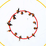 """THE START OF A RACE AT THE WORLD SNAIL RACING CHAMPIONSHIPS  .. More than 200 snails slugged it out at the annual World Snail Racing Championships in a tiny Norfolk village this weekend...The garden snails spent Saturday afternoon sliming over a challenging 13 inch course to win a silver tankard stuffed with lettuce...The quirky competition, which has been running for nearly 40 years, is held in Congham, near King's Lynn in Norfolk and attracts thousands of spectators every year...Although there are a number of imitations, it is the only recognised World Championship. ..This year saw its oldest ever winner with a snail belonging to 62-year-old Claire Lawrence, from Litcham in Norfolk, coming first...Her snail, named Sidney, crossed the finishing line in 3.41 minutes...""""I'm shell shocked my mum has won, as it's the first time she has entered,"""" said her son Harry Lawrence, 21, from Litcham...""""She selected Sidney a couple of days ago and she has been training him in our garden and feeding him on a diet of rocket salad.""""..SEE COPY CATCHLINE  World snail racing winner"""