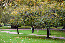 © Licensed to London News Pictures. 01/11/2019. London, UK. A man is seen in St James's Park on a mild autumnal November morning in London. Photo credit: Dinendra Haria/LNP