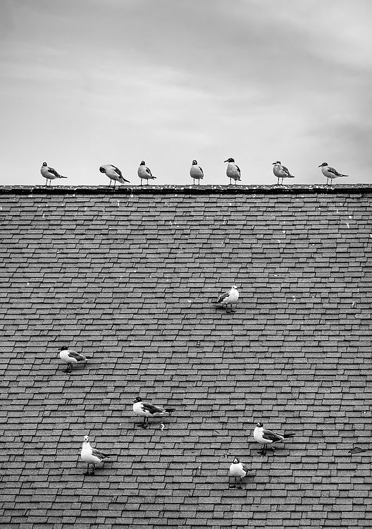 Seagulls on the roof of Captain Nance's Restaurant in Calabash, NC waiting patiently for the shrimp boats to come in.