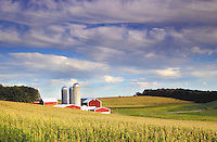 color in local- A farm nestled in the corn on Superior dr. in the township of Ashford East of Lomira Wednesday evening.-patrick flood photo