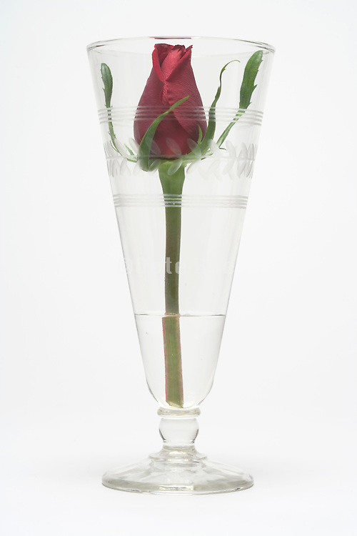a single rose in a high glass with a little bit water against a white background