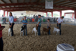 01 August 2014:   McLean County Fair.  Contestants participate in goat showing. This image available for EDITORIAL USE ONLY. A release may be required. Additional information by contacting alook at alanlook.com