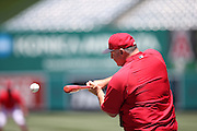 ANAHEIM, CA - JUNE 5:  Mike Scioscia #14 manager of the Los Angeles Angels of Anaheim hits a ground ball during batting practice before the game against the Chicago Cubs on Wednesday, June 5, 2013 at Angel Stadium in Anaheim, California. The Cubs won the game 8-6 in ten innings. (Photo by Paul Spinelli/MLB Photos via Getty Images) *** Local Caption *** Mike Scioscia