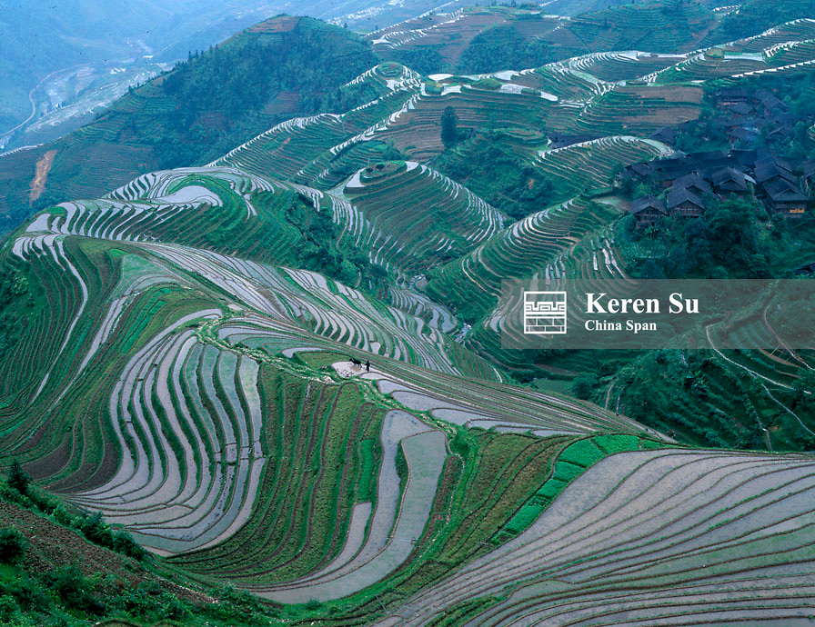 Landscape of water filled terraced rice paddies in the mountain, Longji, Guangxi Province, China