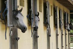 Christine Jamar<br /> Jadem Arabians - Balen 2006<br /> Photo © Hippo Foto