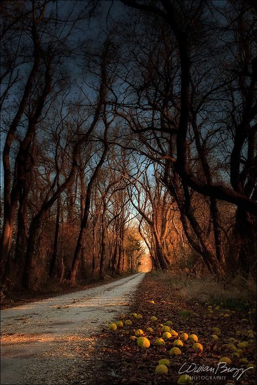 Osage-orange Lane