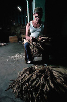 December 1981, Cuba --- A worker sorts cured tobacco by size and color at the Montecristo cigar factory. --- Image by © Owen Franken/CORBIS