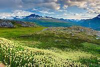 Alpine meadows carpeted with Partridge Foot (Luetkea pectinata) in the Chugach Mountains near Thompson Pass Alaska USA