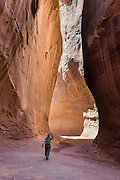 A hiker explores the elegant slot of Leprechaun Canyon in North Wash, between Hanksville & Hite, Utah, USA. Leprechaun Canyon's sandstone dates from the Triassic-Jurassic Period. Directions: from Hanksville, drive 26 miles south on Highway 95 to the junction with Utah 276 and stay left on H95 for another 2.0 miles across a wash, then park on the left (east) along a short road within the first 100 feet before its sandtrap end. Walk up the wash of Leprechaun Canyon 2 miles round trip to a gorgeous subway which narrows to a tight squeeze. Nearby, Glen Canyon National Recreation Area is just 8 miles south on H95.