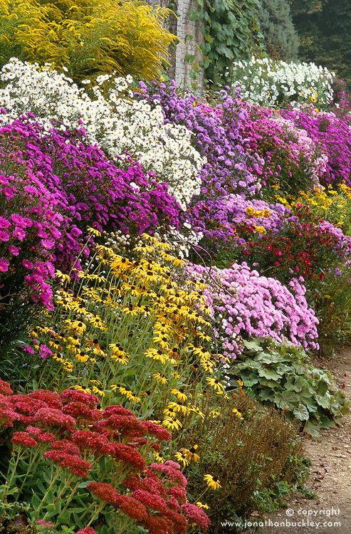The autumn border at Waterperry gardens, Oxford including sedums, asters, solidago and rudbeckia
