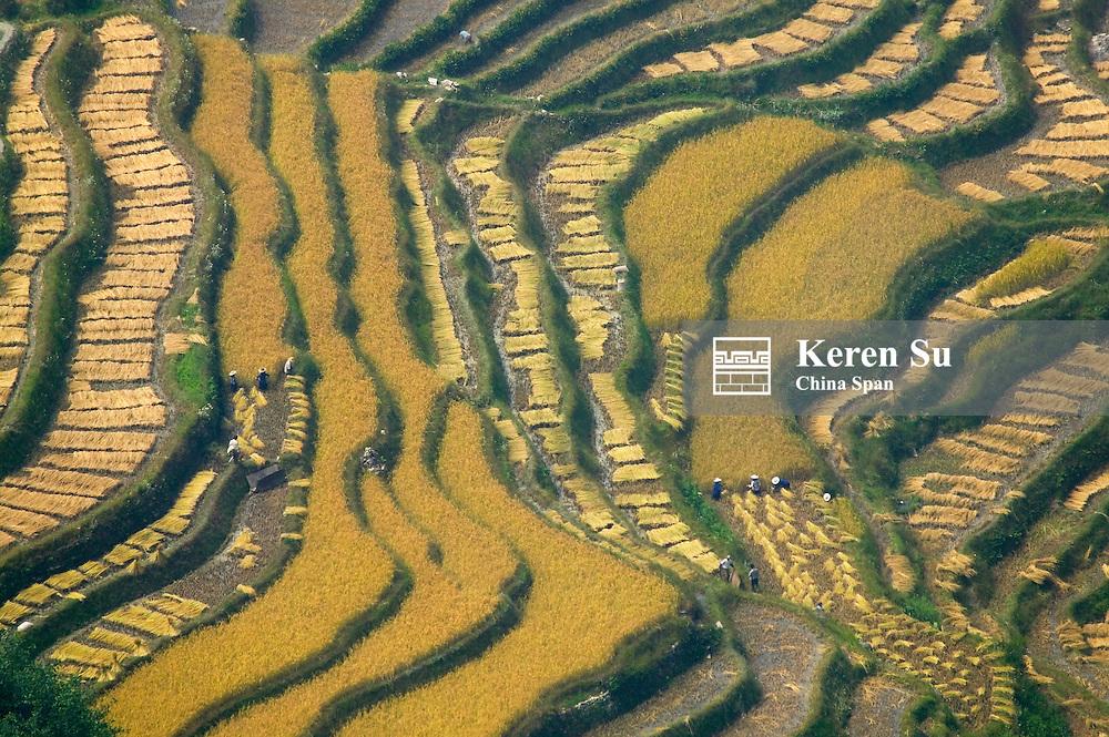 Terraced rice field, Yuanyang, Yunnan, China