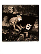 """""""Monkey Gone To Heaven,"""" (1988/1989)"""". Artist's Proof. Image Size: 32cm x 32cm, Paper Size: 40.6cm x 50cm, selenium toned silver gelatin lith print. Each silver gelatin print has been split-selenium toned using archival methods and is stamped, titled, signed on the reverse. Please email me at info@simon-larbalestier.co.uk for pricing, availability and shipping info. All prints are shipped from the United Kingdom."""