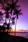 Sunset through silhouetted palms at Anaeho'omalu Bay, Kohala Coast, The Big Island, Hawaii USA