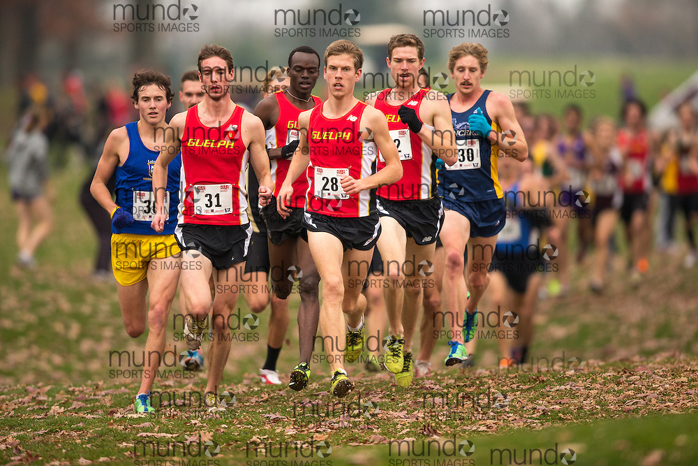 London, Ontario ---2012-11-10--- The Guelph Gryphons mens team of Yves Sikubwabo (33), Andrew Nixon (31), Aaron Hendrikx (28) and Ross Proudfoot (32) lead the pack at the 2012 CIS Cross Country Championships at Thames Valley Golf Course in London, Ontario, November 10, 2012. .GEOFF ROBINS Mundo Sport Images