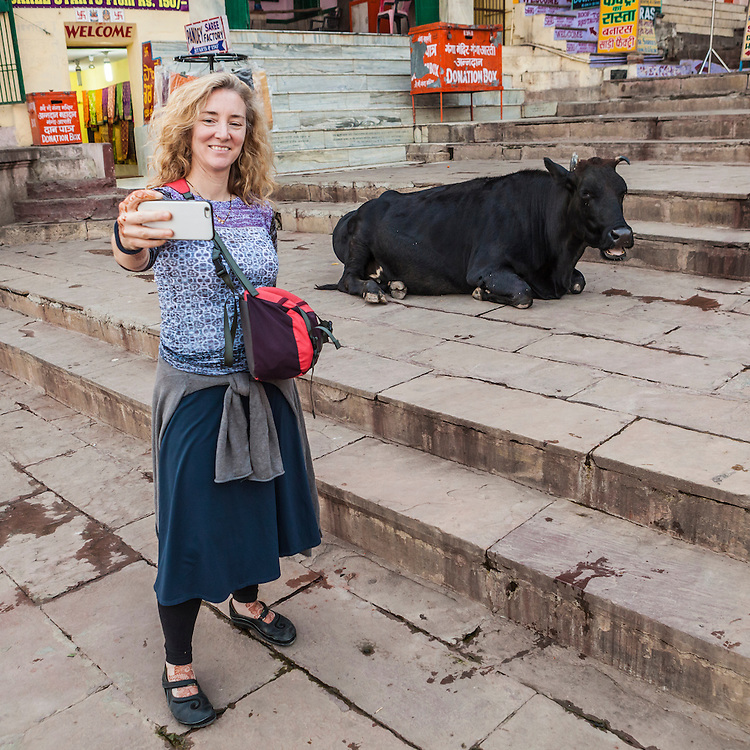 A femaile tourist taking a cellphone selfie with a resting cow on the stairs leading down to the Ganges river in Varanasi, India. Dashaswmedh Ghat Road