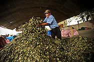 Granato Oriana, 67, packages dried coca leaves for sale at the Sacaba coca market in Cochabama, in the tropical lowlands of Bolivia.