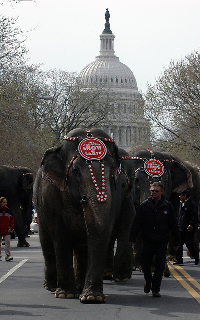 Elephant Walk infront of the US Capitol Building