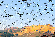 View of Amber fort at early morning