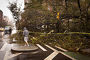 On the grounds of the Natural History Museum, a huge tree felled by Hurricane Sandy obstructs pedestrian traffic.