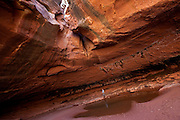 This unnamed canyon is a tributary of Utah's White Canyon, which makes a gorgeous, serpentine cut through Cedar Mesa, near Glen Canyon National Recreation Area. But it remains unprotected.<br /> <br /> It lies at the heart of the proposed Glen Canyon Wilderness, where the vast expanse of Paleozoic-era sandstone known as Nokai Dome eases its way to the upper reaches of Lake Powell in the Glen Canyon National Recreation Area.  This region also includes the soaring Wingate Cliffs of the Red Rock Plateau, Mancos Mesa, Moqui Canyon with its meandering stream, Red Canyon, and the serpentine side canyons of White Canyon. This is one of the most remote regions of the state, but it lacks protection and is threatened by increasing ORV use.<br /> <br /> It is all part of the San Juan-Canyonlands region of Southeastern Utah, one of the most iconic landscapes recommended for protection in America's Red Rock Wilderness Act, boasting dramatic geologic features wrought by elemental forces, as well as internationally significant cultural sites of the Ancestral Puebloans and the Mormon Pioneers. Adorned with buttes and arches, vast stretches of slickrock deposited over 250 million years ago, ancient pinyon-juniper forests and an artist's pallet of red-hued sandstone, the San Juan-Canyonlands region has inspired explorers since the days of John Wesley Powell, and its wonders represent some of the greatest unprotected wilderness in the country.