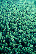 aerial view of tree tops