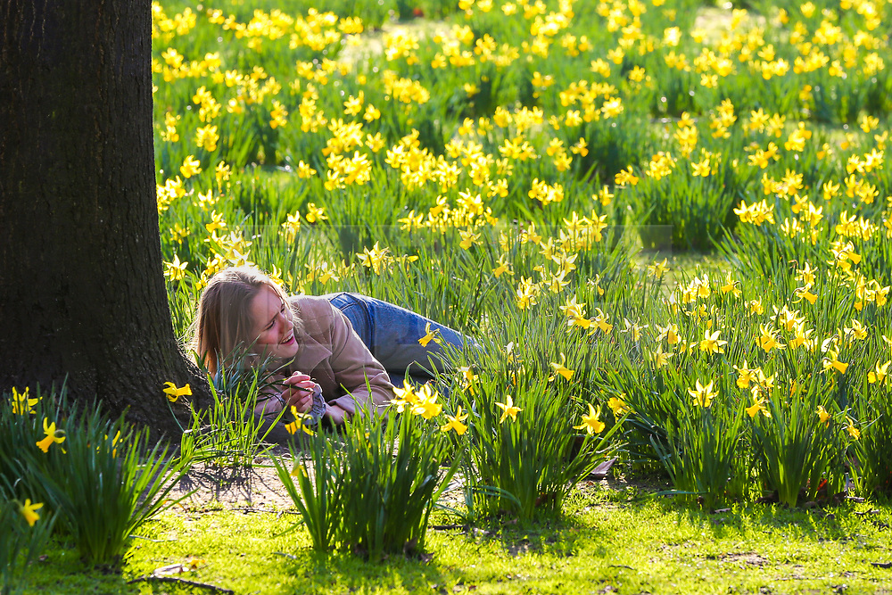 © Licensed to London News Pictures. 22/02/2019. London, UK. A woman lying on the ground in St James's Park on a warm and sunny day as daffodils starts to blossom. Photo credit: Dinendra Haria/LNP