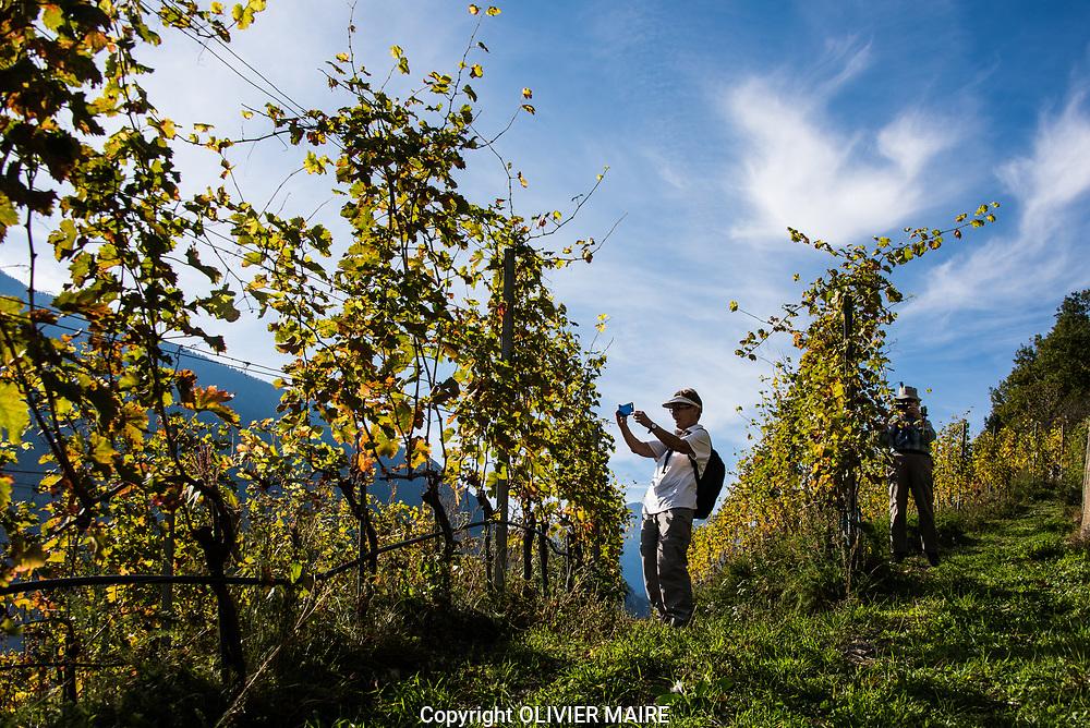 MUSEE DE LA VIGNE ET DU VIN 2017<br /> Vignes et chemin viticolregion Salquenen Salgesch.<br /> Vin, raisin, vignes, Valais Plaine du Rhone, viticulture automne domaine nature paysage valaisan <br /> (OLIVIER MAIRE)
