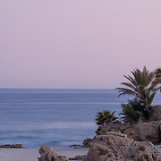 Palm trees by the beach. Cabo Real. BCS.