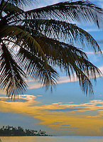 Palm trees silhoutees against dramatic sky