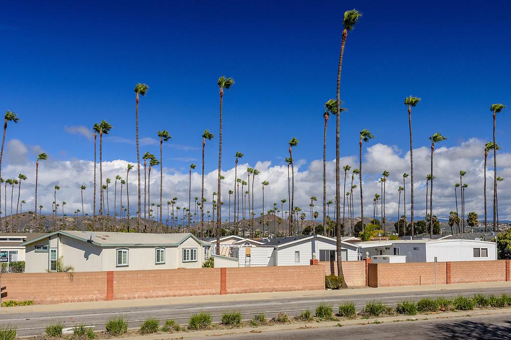 Palm Trees, Homes, Ventura, California