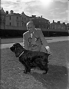 16/08/1952<br /> 08/16/1952<br /> 16 August 1952<br /> <br /> Dog Show - 8th Annual Bray Championship