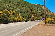 Malibu, CA, Kanan-Dume Road, Bright Yellow Cluster flower bushes, Traffic