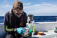 North Atlantic Ocean, October 2014.<br /> Marine biologist Adam Porter wraps a sample in fpil to protect it from sunlight on board the Sea Dragon. &copy; Chiara Marina Grioni