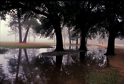 Stock photo of a foggy morning after a rain in Memorial Park