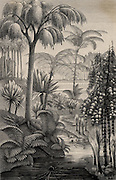 Artist's reconstruction of a forest during the Carboniferous period when the coal measures were laid down. From 'Die Naturkrafte' by M  Wilhelm Meyer (Leipzig, 1903)