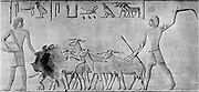 Sheep treading in seed: man on left is leading sheep by offering the foremost ram food. From tomb of Urarna, Sheik Said c2000 BC. Photograph