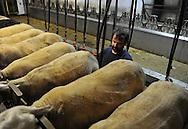 07/05/15 - SAINT BONNET DE CHIRAC - LOZERE - FRANCE - GAEC des Bleuets, elevage mixte bovin/ovin lait. Traite des brebis Lacaune - Photo Jerome CHABANNE