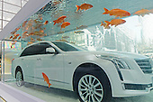 Carps Swim Around Luxury Car In Fish Tank