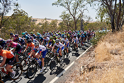 Chloe Hosking (AUS) and Brodie Chapman (AUS) in the bunch on Stage 2 of 2020 Santos Women's Tour Down Under, a 114.9 km road race from Murray Bridge to Birdwood, Australia on January 17, 2020. Photo by Sean Robinson/velofocus.com