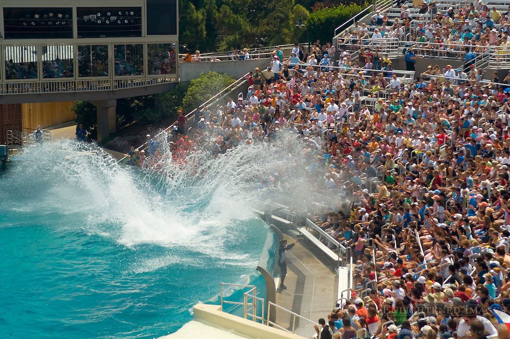 Killer Whale (orcinus orca) splashing water on crowd of people while performing tricks during show at Sea World, near San Diego, California