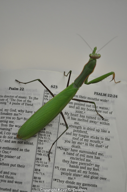 Humorous photograph of a Praying Mantis on an open Bible visually depicting the mantis praying!