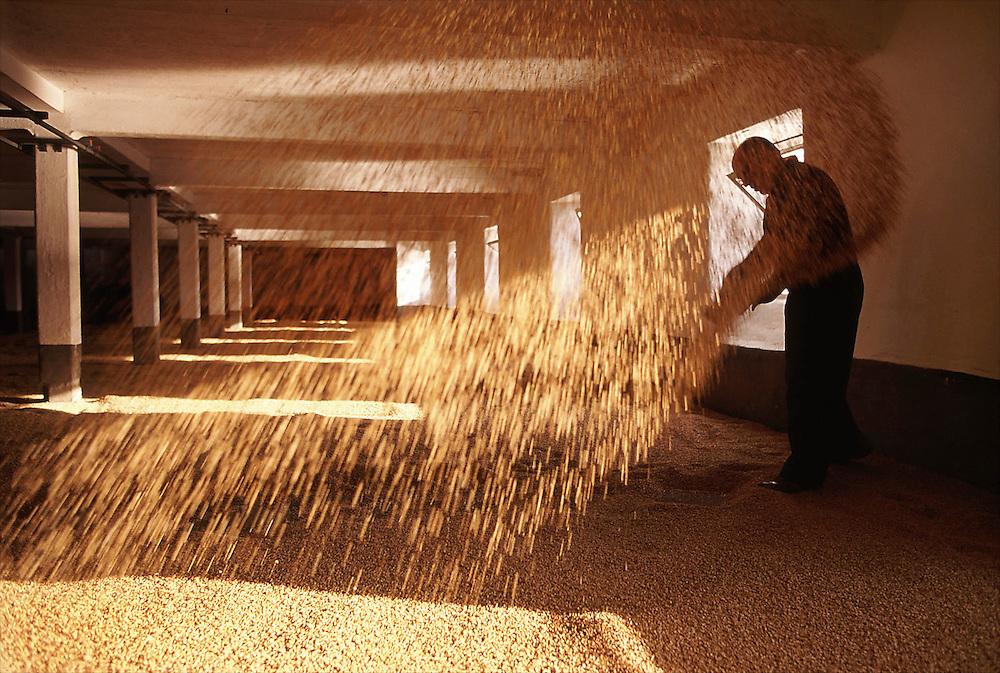 Turning the malted barley at Laphroaig Distillery, Isle of Islay, Scotland